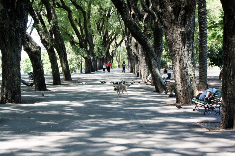 Allee in Buenos Aires